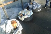 真冬のブラジルでバス会社が野良犬の為に作ったハウスが素敵すぎる!
