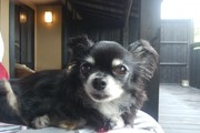 愛犬と行く客室露天風呂付き宿の旅。「はんなり伊豆高原」客室編