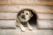【外でしかトイレしない犬の飼い主さんへ】散歩以外に「トイレ出し」してますか?