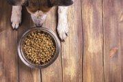 犬の食事の回数と時間はどうやって決めればいいの?
