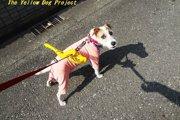 犬好きさんには知ってて欲しい!黄色いリボンの意味とは?