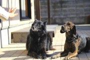 犬に言葉を覚えさせる3つのコツ