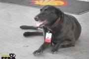 【新たな取り組み!】ガソリンスタンドの従業員として働く犬が登場?!