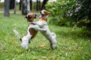 【ケンカ?遊び?】犬同士で遊んでいる時の喧嘩と遊びの線引きを知ろう