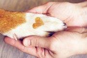 アニマルシェルターのための獣医学『シェルターメディスン』