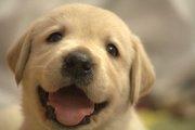 犬の甘噛みの理由と必要なしつけについて