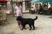 ラブラドゥードルはアレルギー・フレンドリーな犬