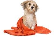 犬も温泉に入ると効果があるのか?