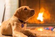 犬に暖房は必要か?設定温度や注意点まで