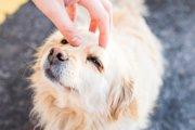 愛犬が満足する撫で方とは?