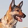 犬の体は心の大きさ!大型犬と暮らすわんこライフのススメ