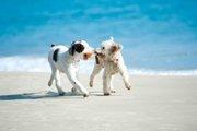 犬と人とでは『行動に対する意味の受け取り方』が異なる