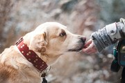 犬の社会化は「犬同士」と「犬と人」のバランスが大切!