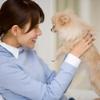 愛犬の噛み癖のしつけ、直し方