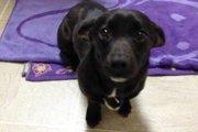 新しい家族との最初の1枚、保護施設から引き取った犬たちの写真