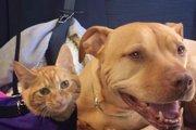 「念願の猫だぁ~」猫が大好きなピットブルの願いが叶い大興奮!