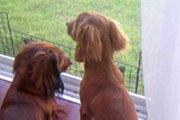 天国にいった先輩犬と気丈に頑張る後輩犬