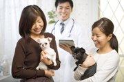 動物病院が治療以外にやっている『3つのサービス』