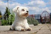 愛犬が保冷剤を誤飲した時のトラブル対応と熱中症対策