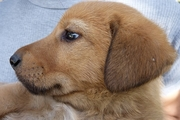 犬の嫌いな音を知っていますか?