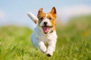 犬を健康へと導こう!オススメしたい5つの生活習慣