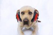 犬が「大きな音」を嫌う理由と慣れさせる方法