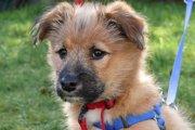 ダブルリードは2本の命綱!いざという時、愛犬の命を守る