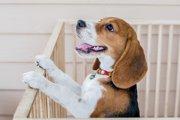 犬用ケージ、サークル、クレートの違いと使い分け方