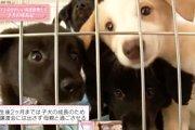 保護施設で産まれた命の記録『保護された子犬たちの成長物語 2016』