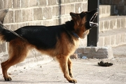 犬の無駄吠えの原因や理由は?犬の心に寄り添って考えてみましょう。