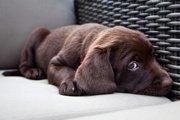 留守番は愛犬がトラウマを抱える原因になる?!