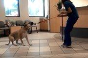 何が何でも動かない!動物病院で必死に抵抗するワンコさん