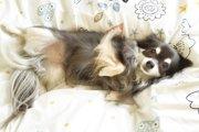 愛犬が仰向けに寝るのは信頼されている証!?