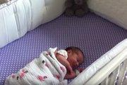 赤ちゃんの声に真っ先に反応!優しく見守るワンコにほっこり♪