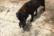 ゴミの山から生後間もない子犬を助け出した心優しい犬の救出劇
