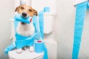 犬がウンチを失敗する!考えられる3つの原因と覚えさせる方法