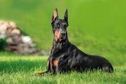 IQの高い犬種ランキングTOP5