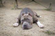 闘犬競技の賛否について