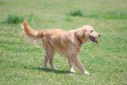 愛犬の心理状態がわかる4つの歩き方