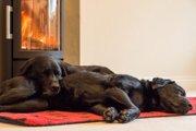 室内犬はストーブに注意!わんちゃんに火傷をさせないための対策