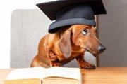 想い出そう、愛犬から学ぶ「人生にとって大切な事」