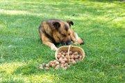 犬にくるみを与えても大丈夫?食べても良い量と危険性