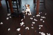 犬はどうして悪い事を直ぐ覚えるのか?