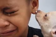 チワワを抱いた男の子、抱きながら涙するその理由とは?