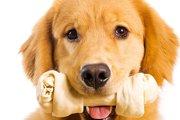 犬用ガムで愛犬が腸閉塞に!?