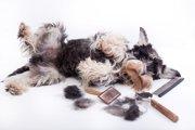 犬がトリミング時に暴れる理由とは?対処法まで