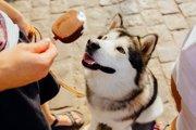 犬が問題行動を起こす原因は全て飼い主にある
