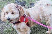 【体験談】簡単にできる愛犬のダイエット!