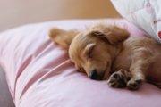 犬にとってクーラーは必要?適正温度や留守番中の対策