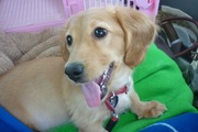 ペットの動物健康保険証を持ってますか?